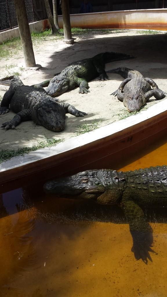 auf Tuchfühlung mit den Einwohnern der Everglades